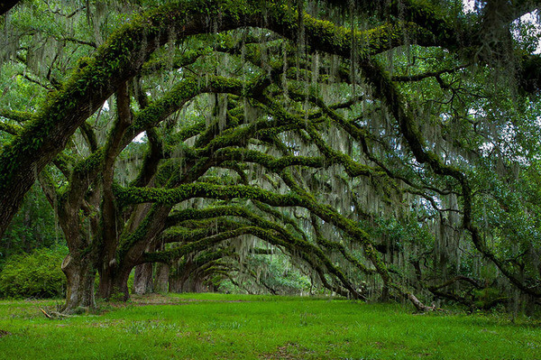most magnificent trees 17