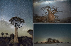 oldest trees at night pictures 1