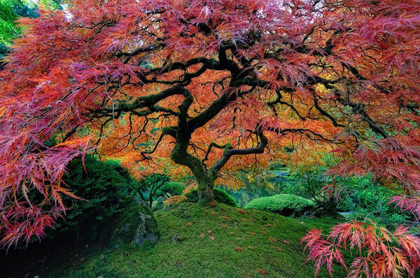 most magnificent trees 5