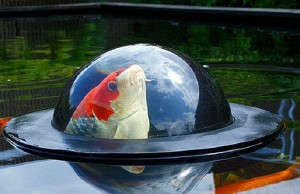 This-clever-dome-lets-pet-fish-take-a-peek-at-what's-beyond-their-underwater-world-990x500