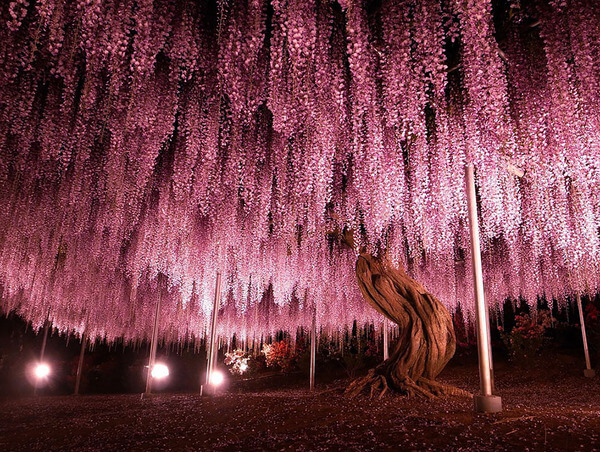 most magnificent trees 3