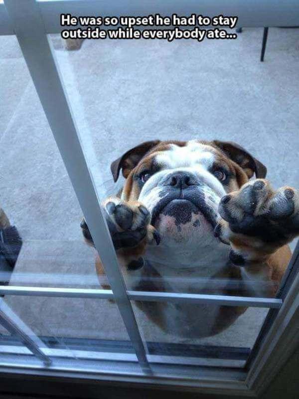 grumpy dogs 2