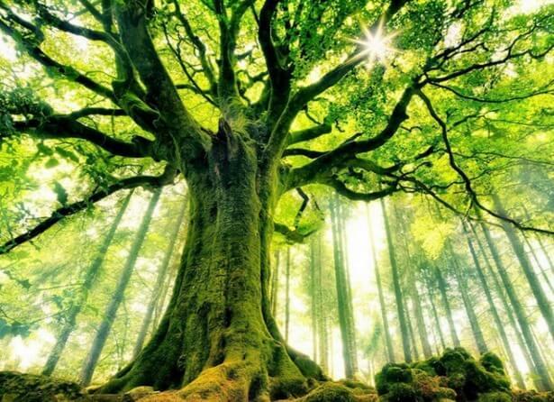 amazing trees 17