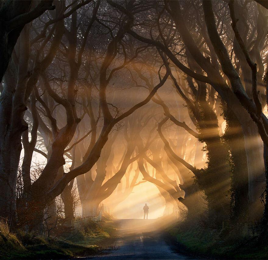 amazing trees 18