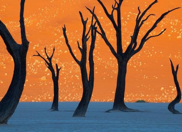 amazing trees 20