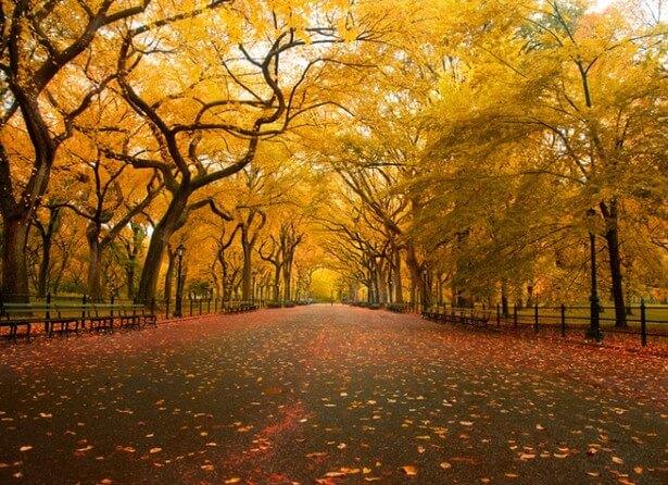 beautiful trees 22
