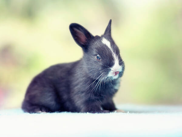 30 days pictures of bunny growing up 8