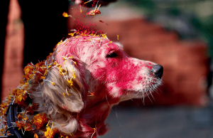 festival to thank dogs 28