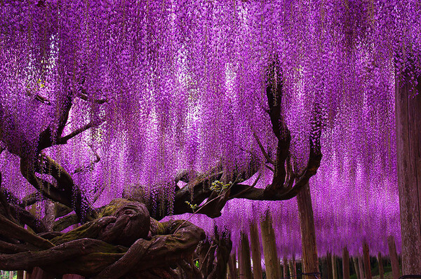 most beautiful trees 2