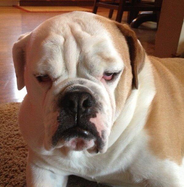 upset dogs 17