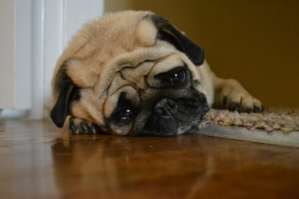 upset dogs 13