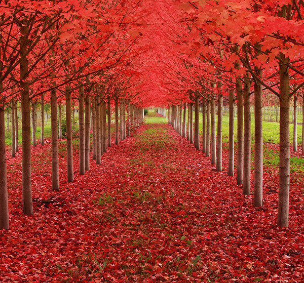 most magnificent trees 13