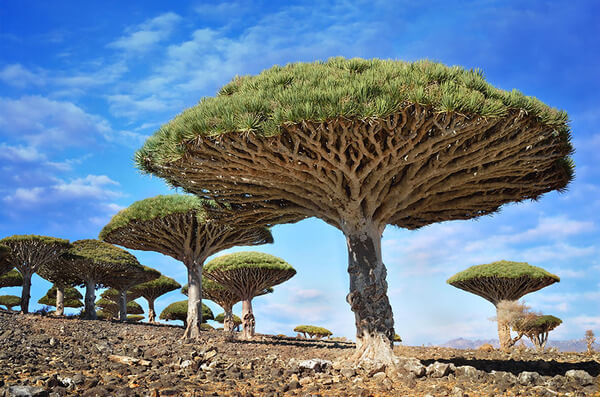 most magnificent trees 11