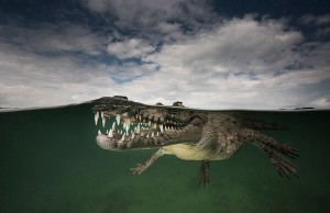 half under water photography 3
