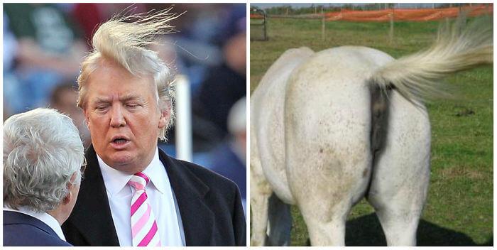 Donald trump looks like 20