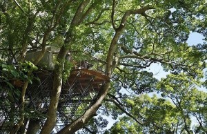 japan's largest treehouse 3