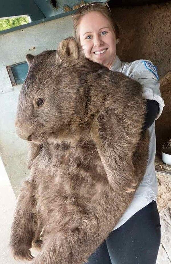 worlds oldest living wombat 12