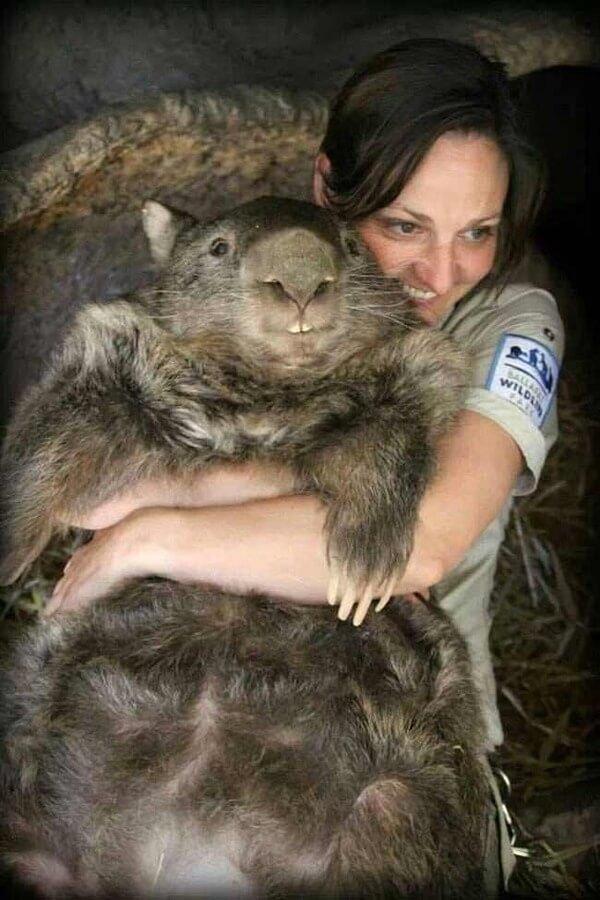 worlds oldest living wombat 8