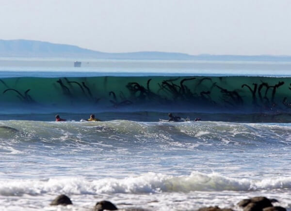 do you fear the sea? 13