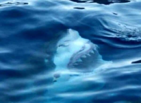 do you fear the sea? 6