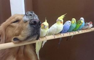 dog and 8 birds friendship 1