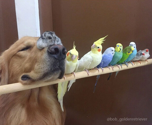 Adorable Dog Is Best Friends With Eight Birds And a Hamster