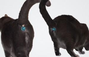 cat butt gem 1