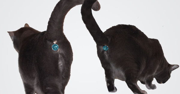 this gem jeweled butt plug will change your cat's butt forever
