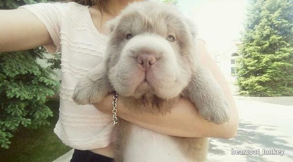dog looks like a donkey 1