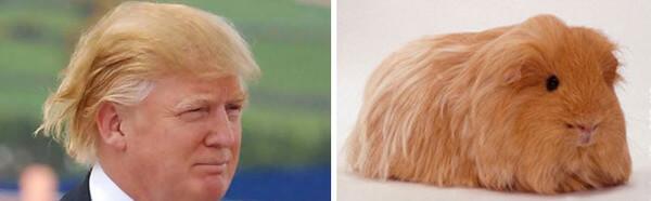 Donald trump looks like 8