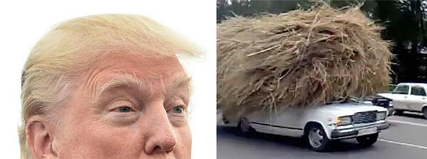 Donald trump looks like 6
