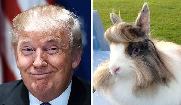 Donald trump looks like 11