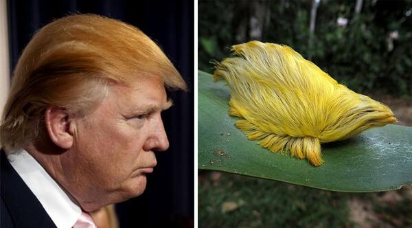 Donald trump looks like 3