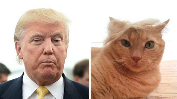 Donald trump looks like 14