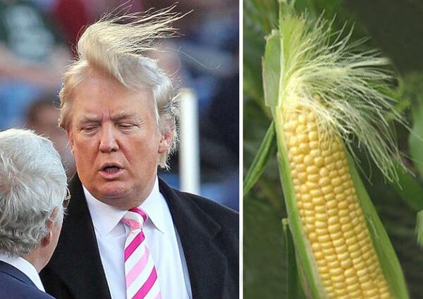 Donald trump looks like 1