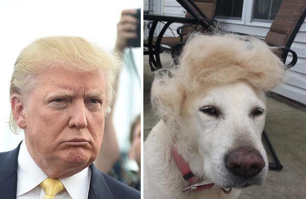 Donald trump looks like 7