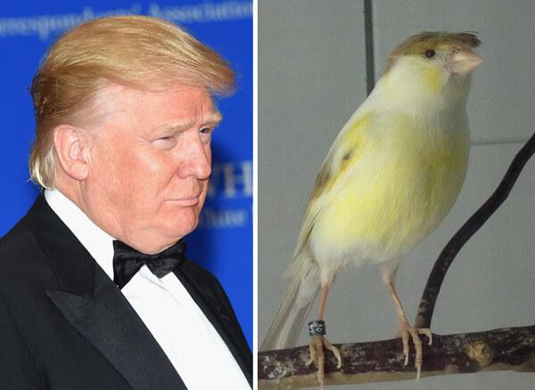 Donald trump looks like 4