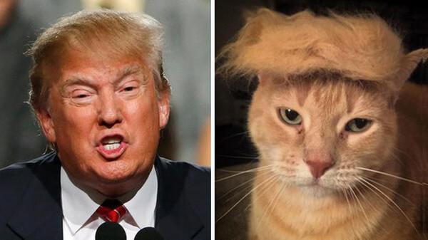 Donald trump looks like 12