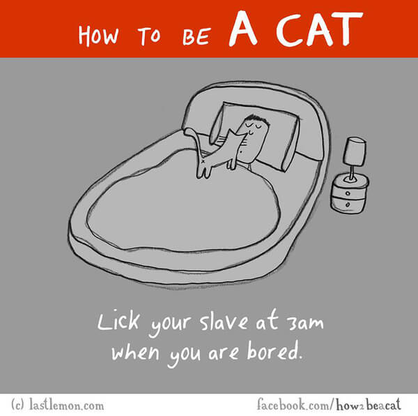 how to act like a cat 7