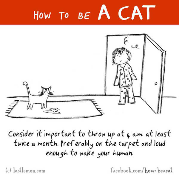 how cats act 12