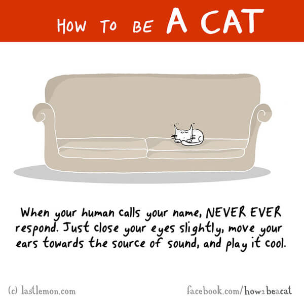 how to be a cat guide 3