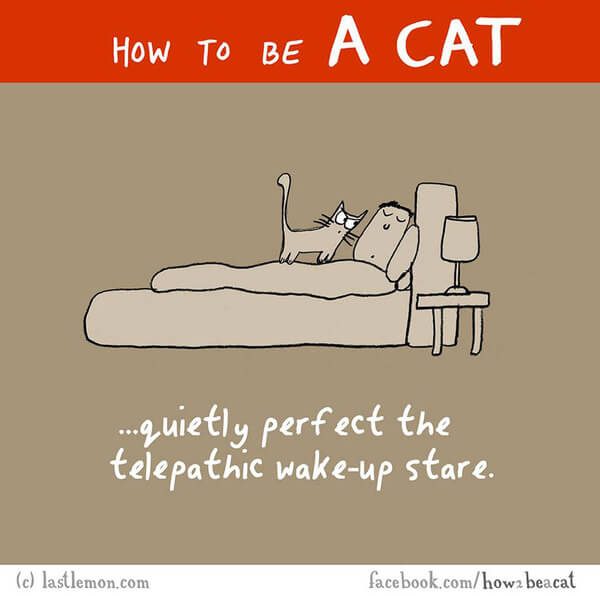 how to be a cat guide 2