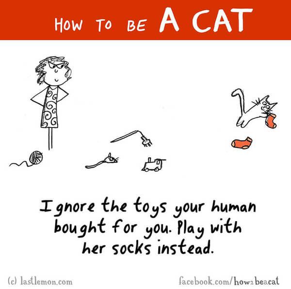 be a cat guide 20