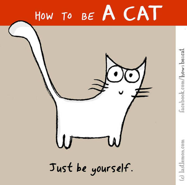 be a cat guide 19