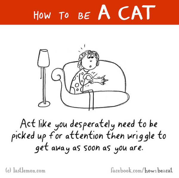 how to act like a cat 5