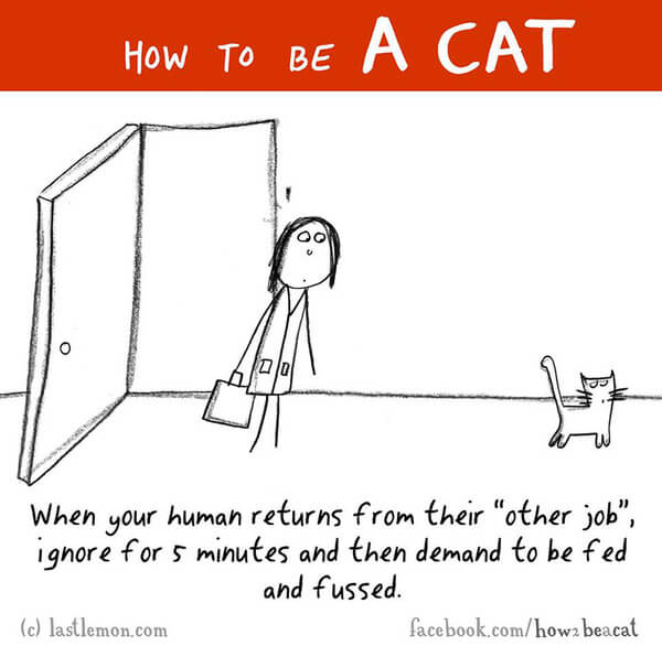 be a cat guide 21
