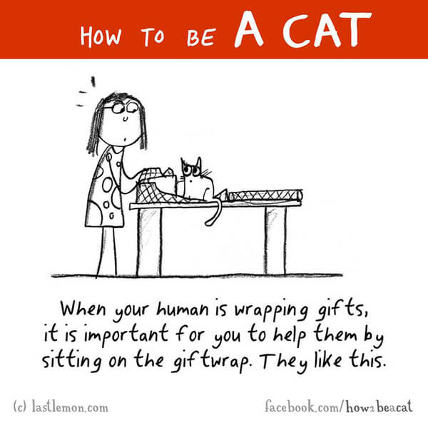 how cats act 10