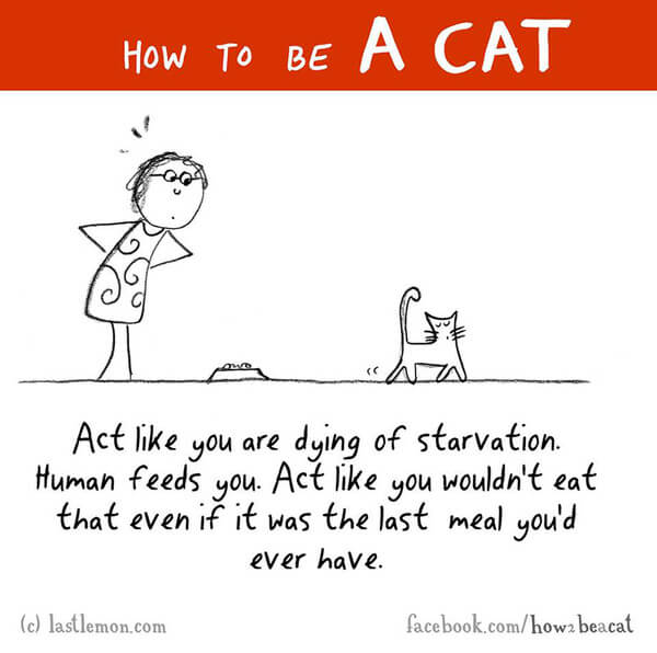 how cats act 11
