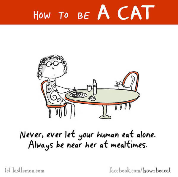 how cats act 14