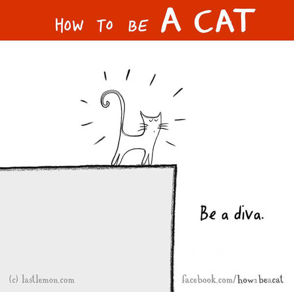 be a cat guide 22